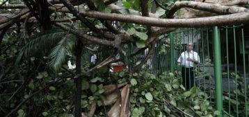 Foto de uma porção de galhos caídos em frente a um condomínio no Leblon para a pauta Chuva e os prejuízos no condomínio quem paga a conta do Blog da Estasa